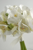 Baby Phalaenopsis Orchid Wedding Bouquet - Cream White