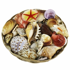 Natural Seashells