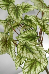 Begonia Bush 17in - Green and Cream - CLEARANCE