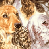Best Of Show - Packed Spaniels - Cream