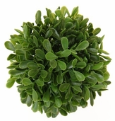 Boxwood Ball 4in - Green Pkg of 6