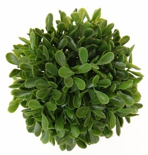 http://ep.yimg.com/ay/yhst-132146841436290/boxwood-ball-4in-green-pkg-of-6-2.jpg