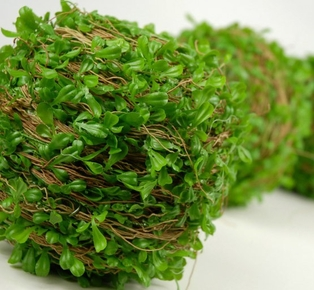 http://ep.yimg.com/ay/yhst-132146841436290/boxwood-ball-5in-green-2.jpg