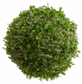 Boxwood  Moss Ball 7in