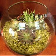 Bubble Bowl Terrarium