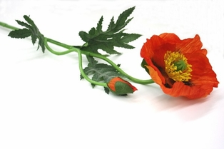 http://ep.yimg.com/ay/yhst-132146841436290/california-poppy-spray-27-in-orange-2.jpg