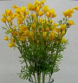 California Poppy Spray Mini  - 26in - Pkg of 12 - Yellow