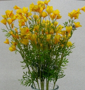 http://ep.yimg.com/ay/yhst-132146841436290/california-poppy-spray-mini-26in-pkg-of-12-yellow-2.jpg