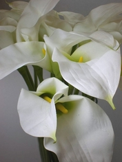 Calla Lily Fresh Cut Pkg of 24 - White - Clearance