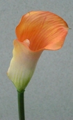 Calla Lily Spray  Plastic - 24in - Pkg of 12 - Peach - Clearance