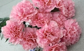 Carnation Spray - 27in - Box of 12 - Pink