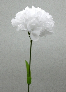 http://ep.yimg.com/ay/yhst-132146841436290/carnation-spray-large-17-in-pkg-of-24-white-2.jpg
