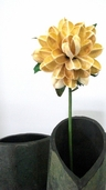 Chinese Peony Dried  Stem 21in - Cream