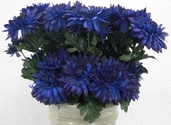 Chrysanthemum Spray -23in - Pkg of 12 - Royal Blue