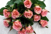 Confetti Small Rose Bud Spray - 25in - Pkg of 12 - Pink Two Tone