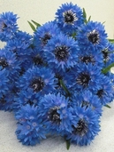Cornflower Spray 25.5 in Blue 12 pack