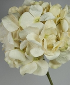 Cream parchment paper hydrangeas (7 inch flower head) flowers