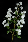 Double Baby's Breath Spray 19in Box of 24 - White