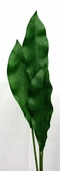 Dracaena Leaf Stem - Green - Clearance