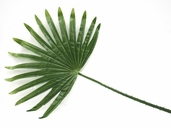 Fan Palm Frond - 21in - Green - CLEARANCE