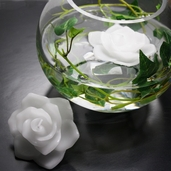Floating Rose Candles Pkg of 12  - White