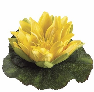 http://ep.yimg.com/ay/yhst-132146841436290/floating-water-lilies-large-yellow-6-5-inch-flower-3.jpg