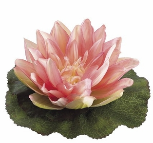 http://ep.yimg.com/ay/yhst-132146841436290/floating-water-lily-and-lotus-pink-2.jpg