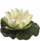 Floating Water Silk Lily and Pad 6.5 in Cream