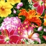 http://ep.yimg.com/ay/yhst-132146841436290/floral-fascination-cotton-fabric-q1668-99108-735s-3.jpg