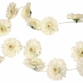 Gerbera Daisy Garlands 6ft - White - 6 pack