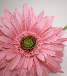 http://ep.yimg.com/ay/yhst-132146841436290/gerbera-daisy-spray-29-in-box-of-12-pink-2.jpg