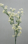 Gypsophila Spray - 23.75in - Box of 6- Cream