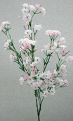 Gypsophila Spray - 23.75in - Box of 6 - Pink