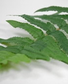 Leather Fern Leaves - 18in - Pkg of 12 - Green