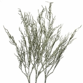 Lighted Willow Branches - 39 inch - Champagne Glitter