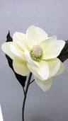 Magnolia 25 in - Pkg of 12 - Cream White