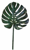 Monstera Leaf Spray 24in - Green Gold - Clearance