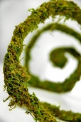 Natural Preserved Moss Vine 5 - 6 ' Garland