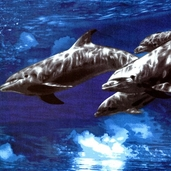Ocean Adventure: Dolphins from Fabri-Quilt Inc.
