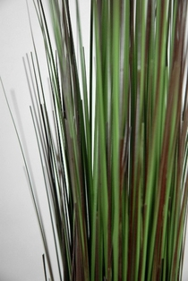 http://ep.yimg.com/ay/yhst-132146841436290/onion-grass-green-and-brown-36-inch-2.jpg