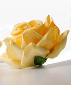Parchment Roses (2.5 inch wide) Yellow Pkg of 12 - Clearance