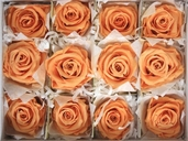 Preserved Orange Rose Heads 2.5 inch package of 12 - Clearance