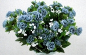 Rambling Rose 18 in - Pkg of 12 - Blue