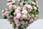 Rambling Rose 18 in - Pkg of 12 - Pink