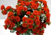Rambling Rose 18 in - Pkg of 12 - Red