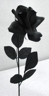 http://ep.yimg.com/ay/yhst-132146841436290/rose-spray-open-20-in-pkg-of-12-black-2.jpg