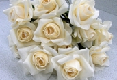 Rose Spray Open 20 in Pkg of 12 - Cream/ White