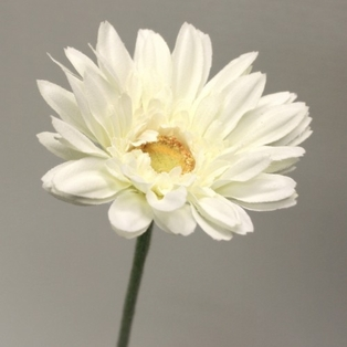 http://ep.yimg.com/ay/yhst-132146841436290/royal-gerbera-daisy-small-spray-22-5in-pkg-of-24-cream-2.jpg