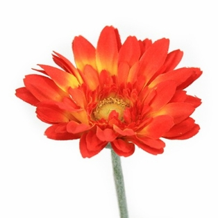 http://ep.yimg.com/ay/yhst-132146841436290/royal-gerbera-daisy-small-spray-22-5in-pkg-of-24-orange-2.jpg