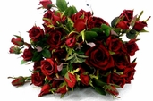 Royal Rose Spray 28in - Pkg of 12 - Red